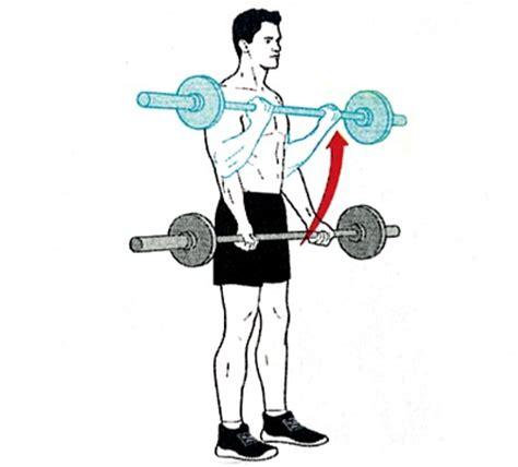 Barbel Curl bar standing biceps curl bodybuilding wizard