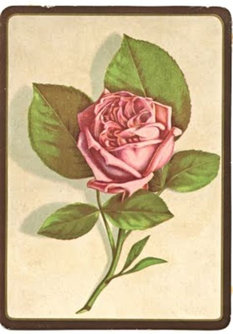 vintage clip art perfect pink rose  graphics fairy