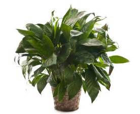 plantes d interieur gamme de produits famiflora