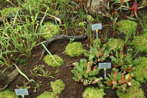 Garten Pflanzen Berlin by Botanischer Garten Und Botanisches Museum Berlin