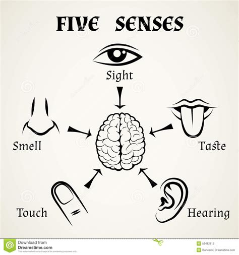 free download mp3 you feel up my senses five senses icons stock vector image 52482615