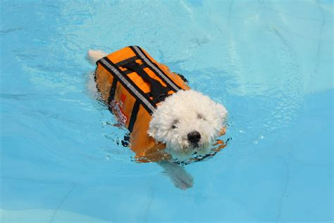 where do dogs like to be pet does your like to swim morris animal inn