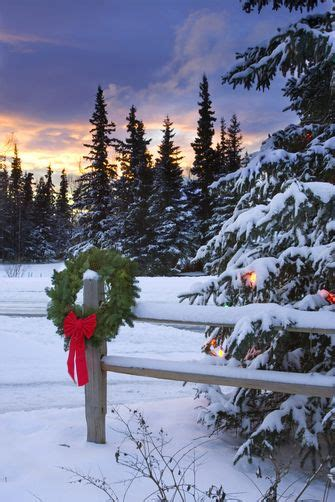 snowy alaskan cluster light tree 1220869 wreath hanging on split rail fence next to decorated tree w sunset anchorage