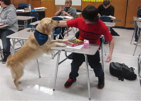 therapy dogs for anxiety schools try to ease pressure on stressed students