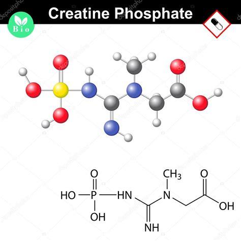 creatine phosphate estructura molecular fosfato de creatina vector de