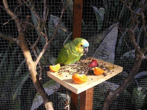 come costruire una gabbia per conigli gabbia pappagalli pappagalli