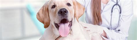 chemotherapy for dogs chemotherapy for dogs isle veterinary hospital