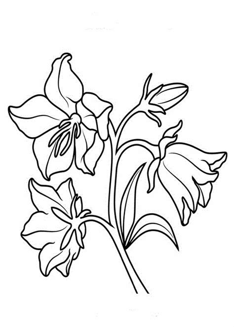 fiori disegno disegni da colorare fiore disegnicoloragratis