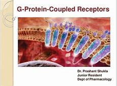 G- Protein Coupled Receptors G Protein Coupled Receptors Gpcrs