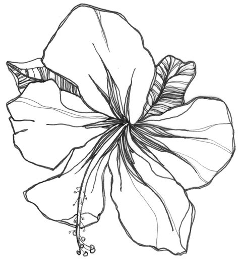 Beautiful Easy To Draw Flowers by Easy Flower Drawings Drawing Pencil