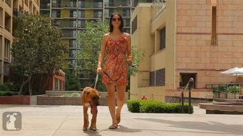 la dogs walkla shows the enjoying los angeles most iconic locations huffpost