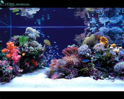 Saltwater Aquarium Aquascape by Stunning Japanese Aquariums From Cp Farm