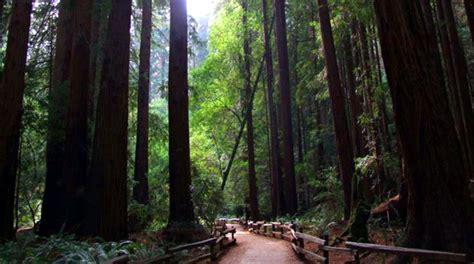 con al parco pi 249 alberi e meno in california per ammirare gli alberi pi antichi mondo