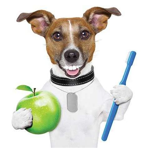puppy health february is national pet dental health month contest closed fido friendly