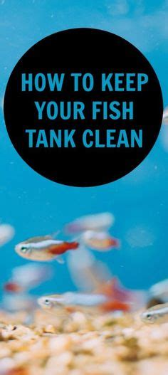 how to clean fish tank solutions ideas pinterest
