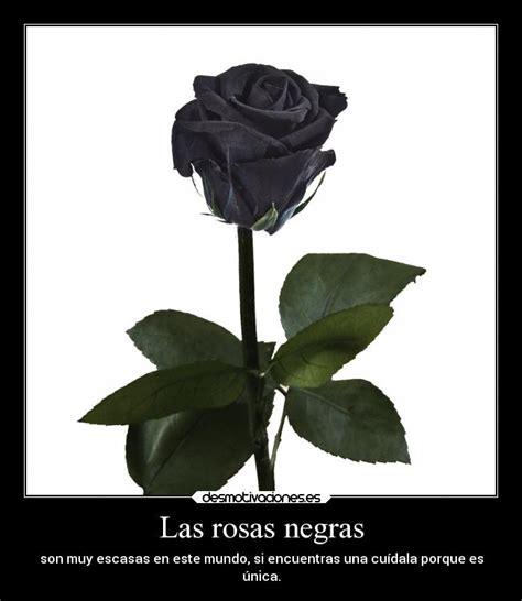 imagenes de rosas negras con frases de amor las rosas negras desmotivaciones