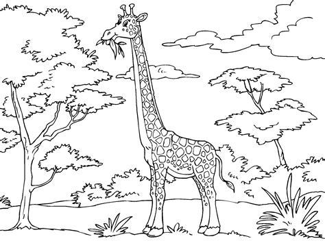 imagenes de jirafas faciles de dibujar jirafa para imprimir paracolorear net