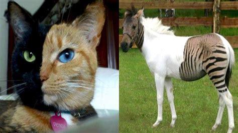 imagenes otoñales con animales 3 animales 218 nicos con quimerismo en el mundo youtube