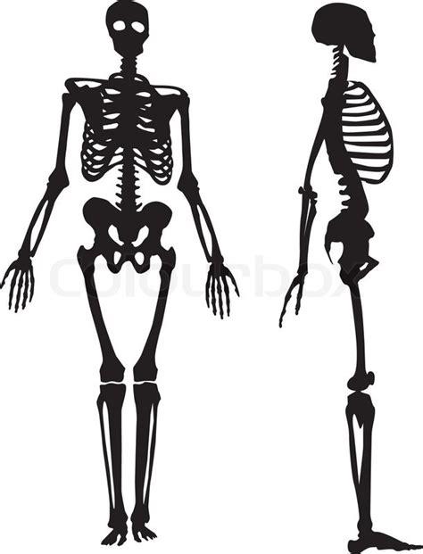 human vector tutorial silhouette of a human skeleton vector illustration