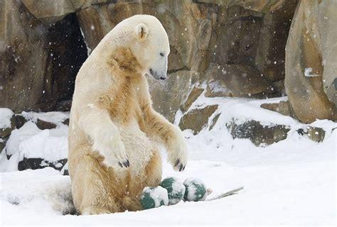 zoologischer garten läden zoologischer garten berlin av berichte fotos und