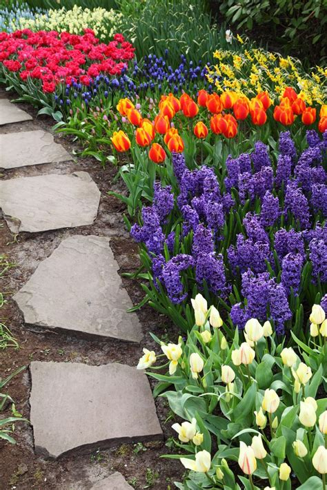 beauty spring flower pictures creative home garden