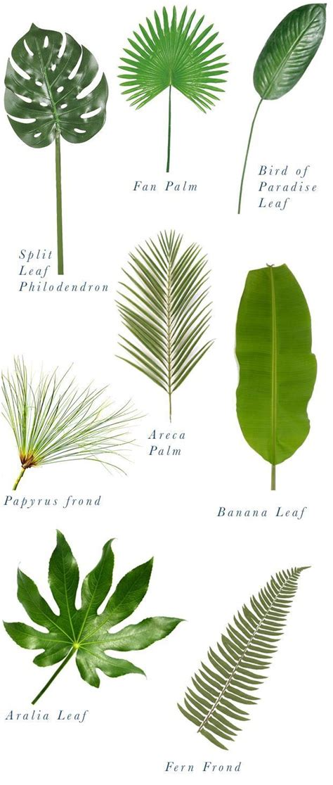 different types of tropical plants trees flowers 21 best images about palm trees on pinterest trees