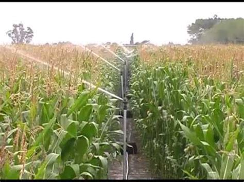 irrigated corn maize clip expoagro 1 youtube