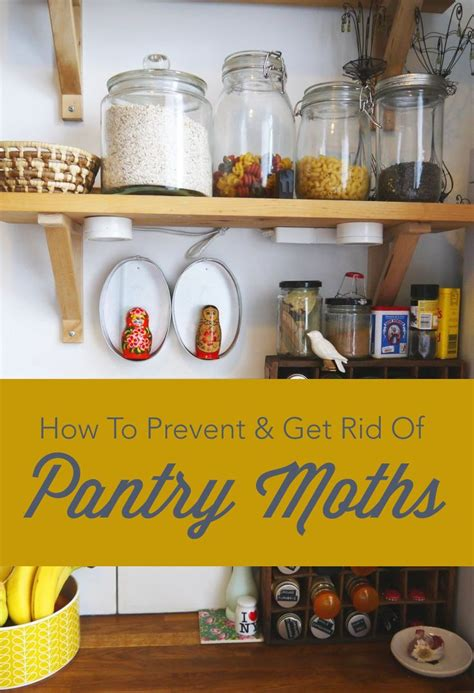 How To Get Rid Of Pantry Moths For by 25 Best Ideas About Pantry Moths On Moth Repellent Meal Moths And Stain Removers