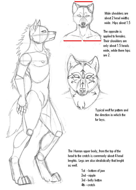 werewolf drawing tutorial werewolf furry male wolf newhairstylesformen2014 com