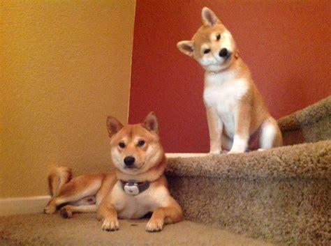 cute dog pictures  pics amazing creatures