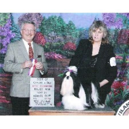 shih tzu puppies reno cyn lu shih tzu s shih tzu breeder in reno nevada listing id 21139