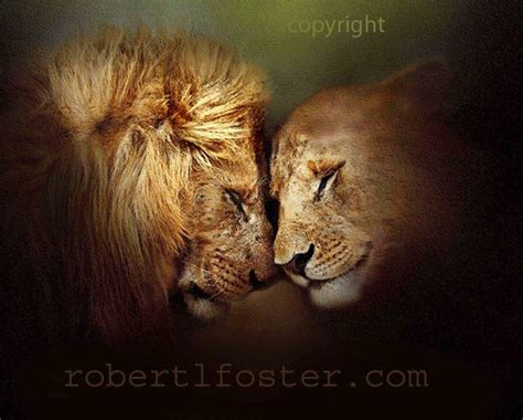 lion print lion art print painting lioness leo lion wildlife male lion le