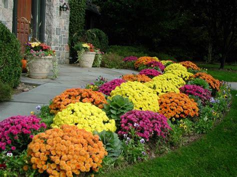 garten herbst chrysantheme im herbst wissenswertes und n 252 tzliche tipps