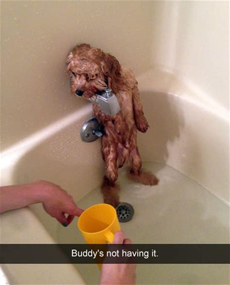 dog in the bathtub i can has cheezburger done funny animals online