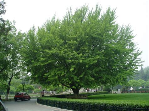 19 best images about trees shrubs on pinterest trees