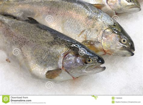 Shelf Of Fish by Fish Is On Store Shelves Royalty Free Stock Photo Image