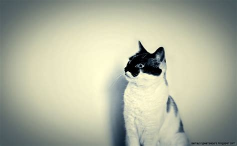 cat wallpaper on tumblr hipster cat tumblr backgrounds amazing wallpapers