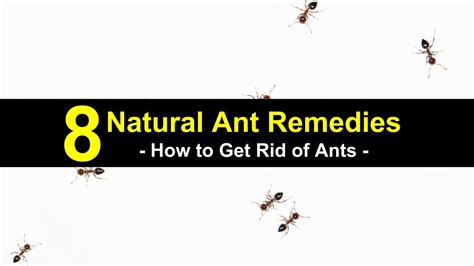how to get rid of ants in your bathroom 8 natural ant remedies how to get rid of ants