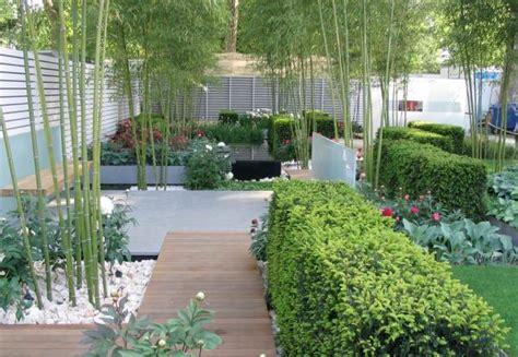 bamboo in the garden plants webzine co