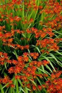 full sun perennial flowers zone 7