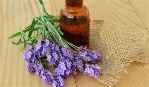 Minyak Atsiri Lavender membuat obat nyamuk alami sederhana bibitbunga