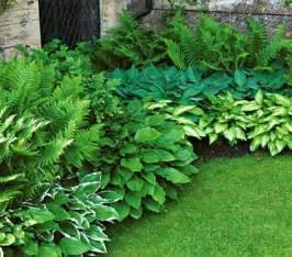 perennial shade garden plans for shade loving perennials perennial shade plants