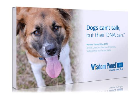dna test for dogs dna test breed test wisdom panel canine dna testing to breeds picture