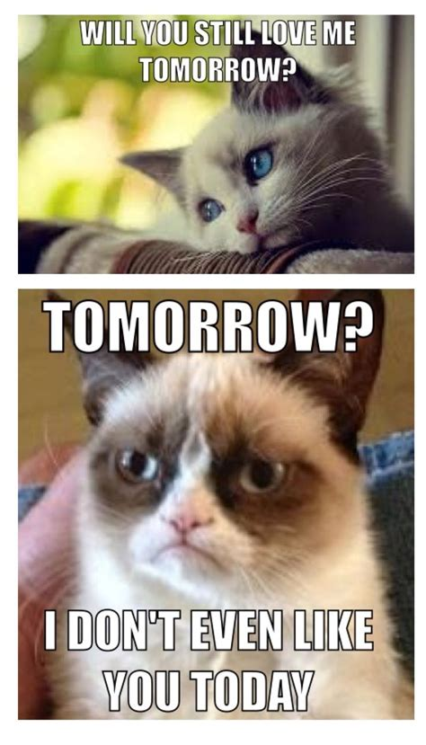 Unhappy Cat Meme - grumpy cat meme grumpycat animals pinterest grumpy