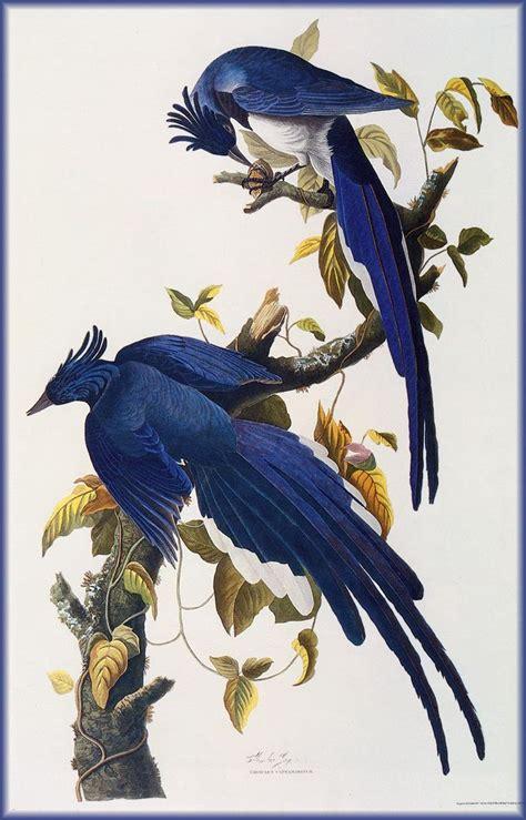 john james audubon art pinterest