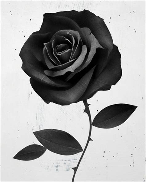 graphic 3d rose drawing tattoo best tattoo ideas gallery