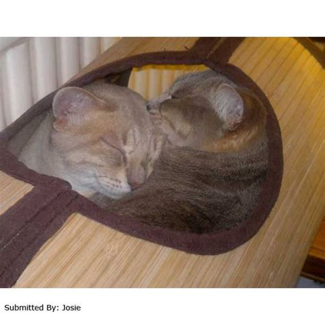 cat hammock bed bamboo radiator bed hammock cat purrfect design
