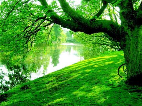 imagenes verdes hermosas le perle di stardoll