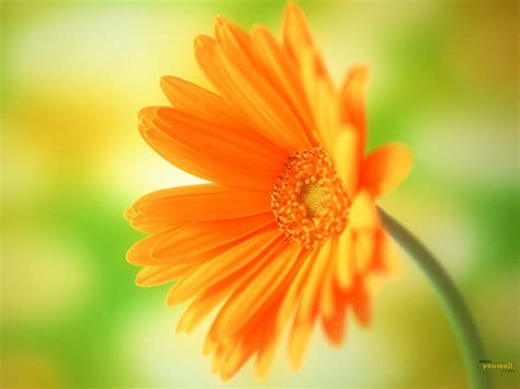 beautiful orange orange flowers wallpaper hd pictures one hd wallpaper