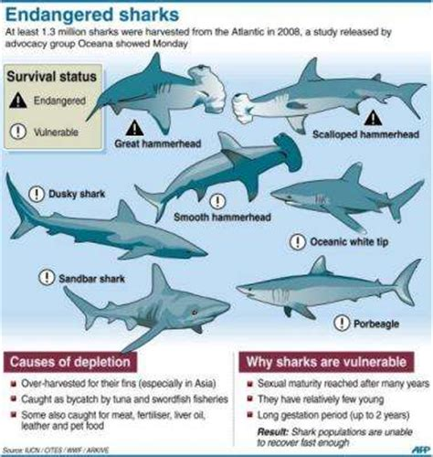 our choice extinction or evolution the analyst and the astrologer books more than a million atlantic sharks killed yearly study